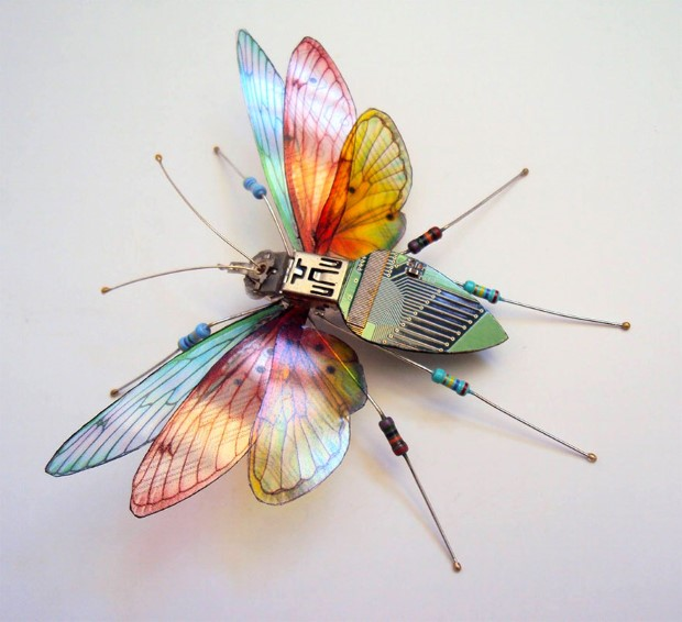 Julie Alice Chappell okridleny hmyz zo suciastok 4