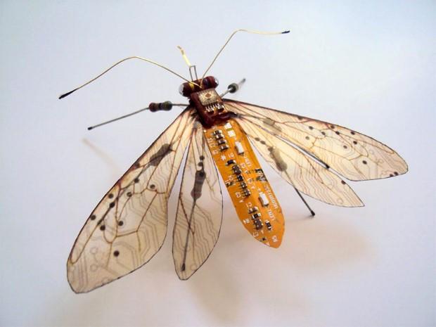 Julie Alice Chappell okridleny hmyz zo suciastok 5