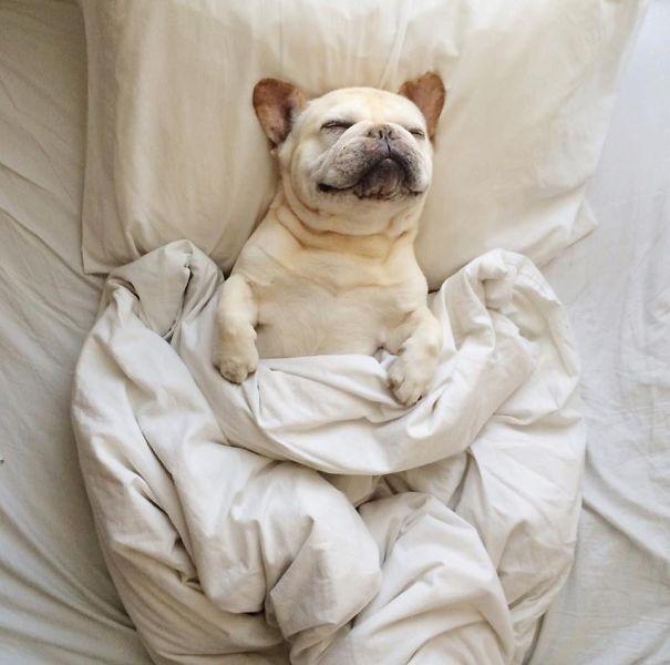 psikovia spiaci v posteli 10