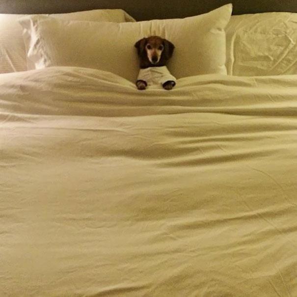 psikovia spiaci v posteli 14