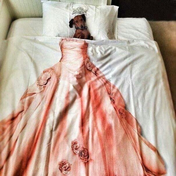 psikovia spiaci v posteli 15