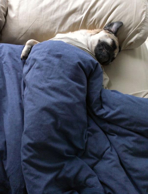 psikovia spiaci v posteli 17