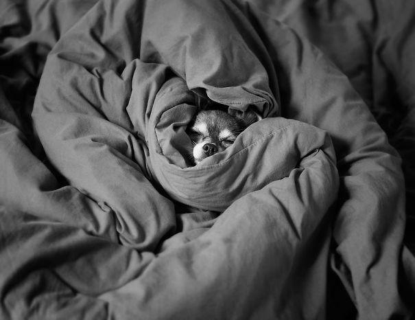 psikovia spiaci v posteli 22
