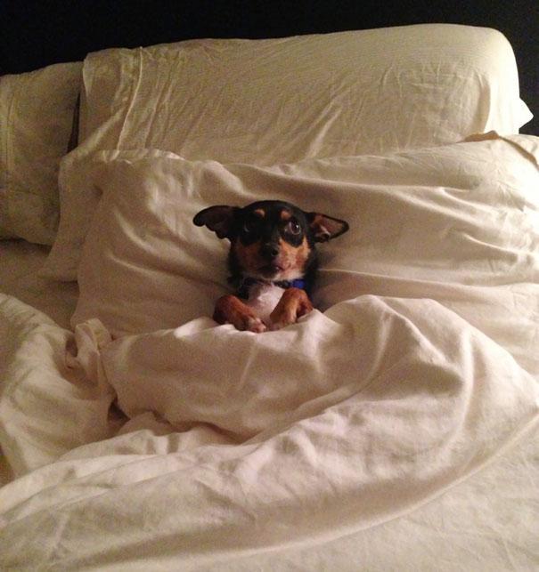 psikovia spiaci v posteli 23