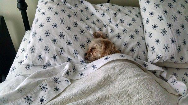 psikovia spiaci v posteli 24
