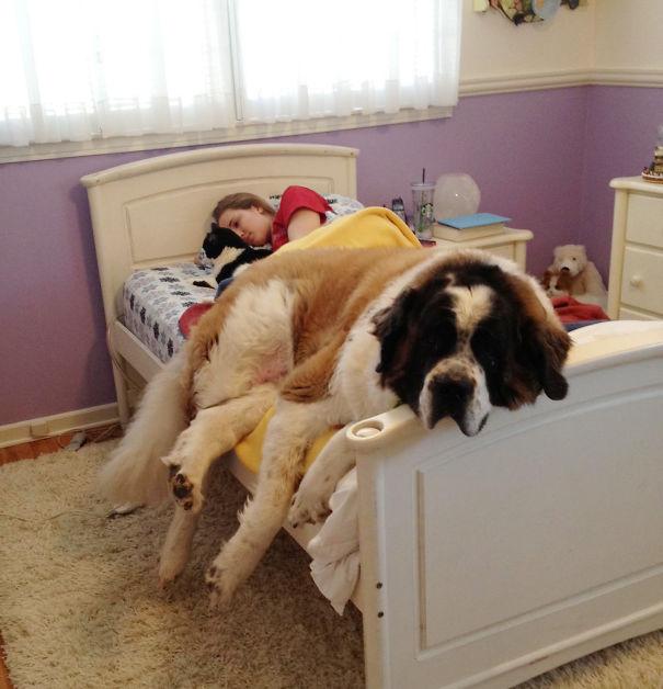 psikovia spiaci v posteli 4