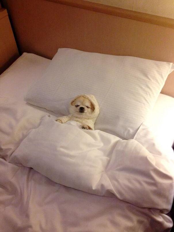 psikovia spiaci v posteli 5