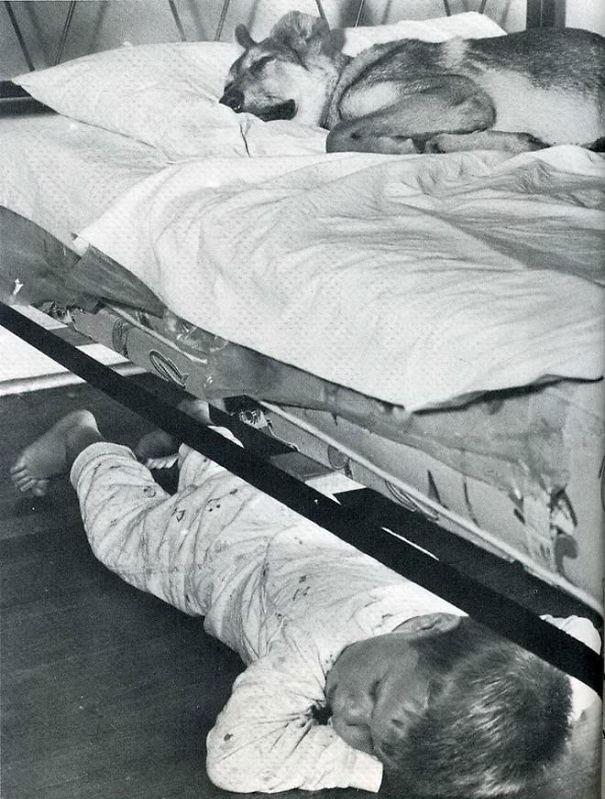 psikovia spiaci v posteli 6