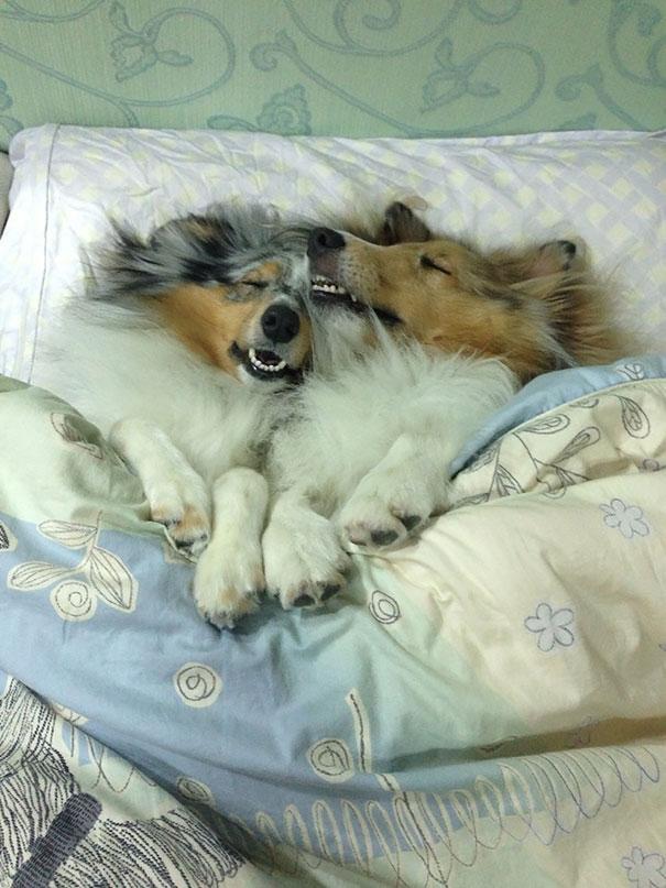 psikovia spiaci v posteli 7