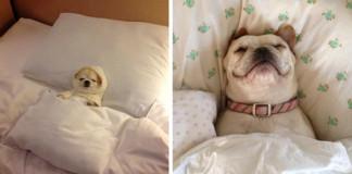 25 ospalých psíkov, ktorí Vás rozhodne nenechajú spať vo Vašej posteli