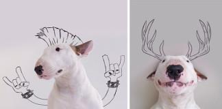 Rafael Mantess vytvára zábavné snímky so svojim bulteriérom Jimmym