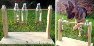 Hra pre psíkov, ktorá ich zabaví na dlhú chvíľu | Návod ako postupovať