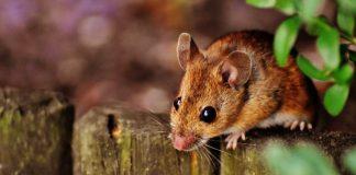 Nemáte radi myši? Po týchto fotografiách možno zmeníte názor