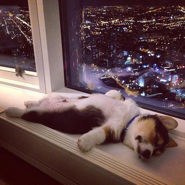 spiace steniatka 12