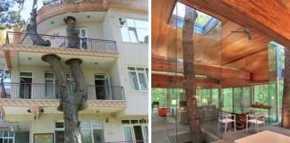 Kreatívna architektúra rešpektujúca to, že stromy tu boli skôr
