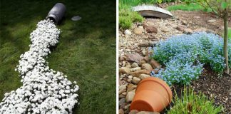 Rozliate kvety premenia vašu záhradu na potok farieb | 15+ nápadov