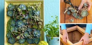 Vertikálna záhradka zo sukulentov v podobe obrazu | Návod