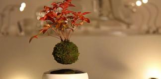 Japonci vytvorili vznášajúce sa bonsaje Air Bonsai | Hoschinchu