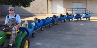 80-ročný dedko vytvoril vláčik, aby vozil zachránených psíkov