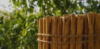 Príbeh škorice alebo ako sa vyrába škorica
