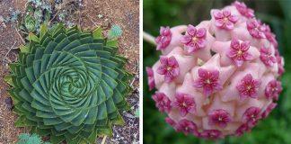 Rastliny s pravidelnými vzormi | Kreativita prírody nepozná hranice