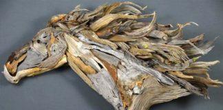 Jason Waldron mení naplavené drevo na majestátne umelecké diela
