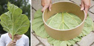 Dekoračné kamene s motívom listu na záhradný chodník | DIY nápad