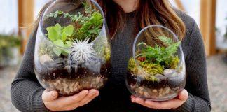 Rastlinné teráriá prinesú do domácnosti viac prírody | Návod a nápady