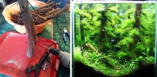 Prírodný biotop v akváriu | Jednoduchý návod ako postupovať