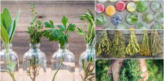 11 užitočných rád, ako zberať a uchovávať bylinky