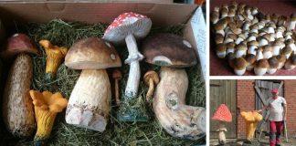 Vyrezávané huby na nerozoznanie od tých skutočných | Dalibor Novotný
