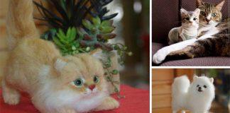 Plstené mačiatka a psíkovia, ktorých len ťažko rozoznáte od tých živých