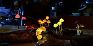 Svetielkujúce huby premenia izbu na čarovný les   Lampy od Yukio Takano