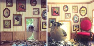 Mini domčeky pre vtáčiky nalepené na skle jej vytvárajú rozkošnú scénku