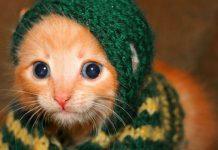 Pletené svetríky pre zvieratká si vás získajú | Zvieracia móda