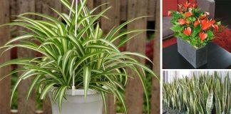 Rastliny čistiace vzduch | 18 najlepších vzduch-čistiacich izbových rastlín