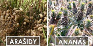 Ako rastú exotické potraviny, predtým než sa dostanú do obchodu