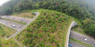 Mosty pre zvieratá, vďaka ktorým môžu bezpečne prejsť ponad diaľnicu