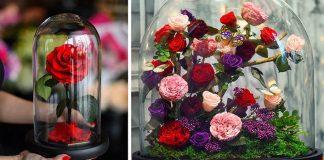 Forever Rose | Kúzelné ruže vydržia žiť a vyzerať pôvabne až niekoľko rokov