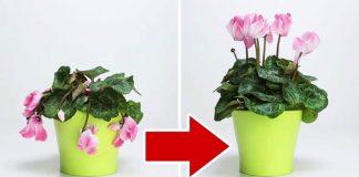 3 ingrediencie, ktoré privedú vaše zvädnuté izbové kvety opäť k životu!