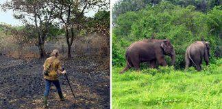 Manželia za 26 rokov vrátili dažďový prales späť k životu | Sai Sanctuary