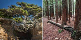 Životaschopnosť týchto stromov dokazuje, že príroda si vždy nájde cestu!