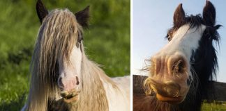 Keď vám bude smutno, spomeňte si, že aj koňom môžu narásť fúzy