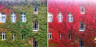 Fotky porovnávajú krajinu v lete a v jeseni, keď sa všetko oblečie do farieb