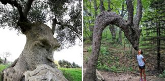 Stromy, ktoré na prvý pohľad vyzerajú ako niečo úplne iné
