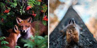 Joachim Munter fotí magické fotky zvierat z fínskych lesov
