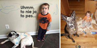 15 dôvodov, prečo by ste nemali nechávať deti samé doma so psíkmi