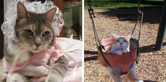 15 dôvodov, prečo by ste nemali nechávať deti samé doma s mačkami