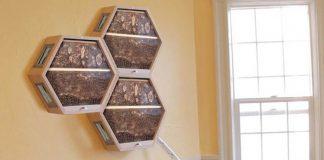 Včelí úľ v obývačke | BEEcosystem chce zachrániť včely bezpečnými úľmi
