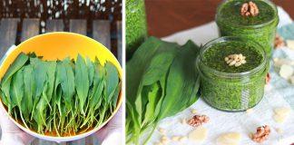Pesto z medvedieho cesnaku | Recept na zdravé domáce pesto